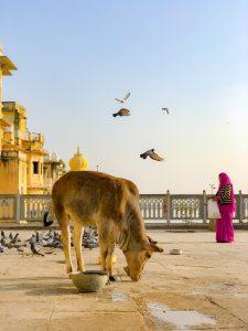 Femme à Udaipur