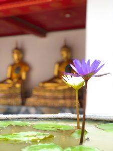 Les fleurs de Bangkok