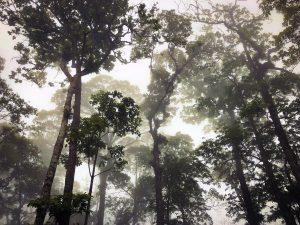 Le parc national de Ba Vi au Vietnam